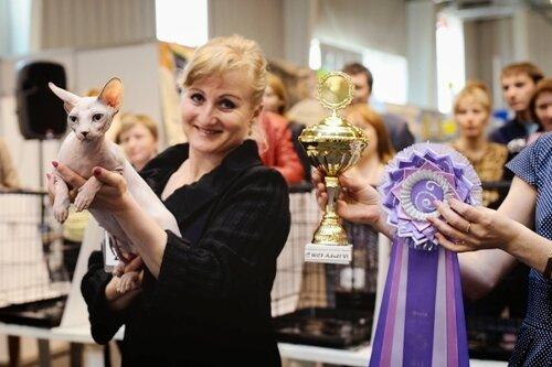Place 6 - 242 NATURA CATS VICKY (Female) SPH g 32 03 Бекметова С. В. Ольф, Чита