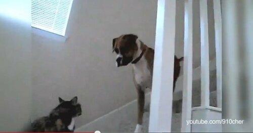 Ты не пройдешь, собака.