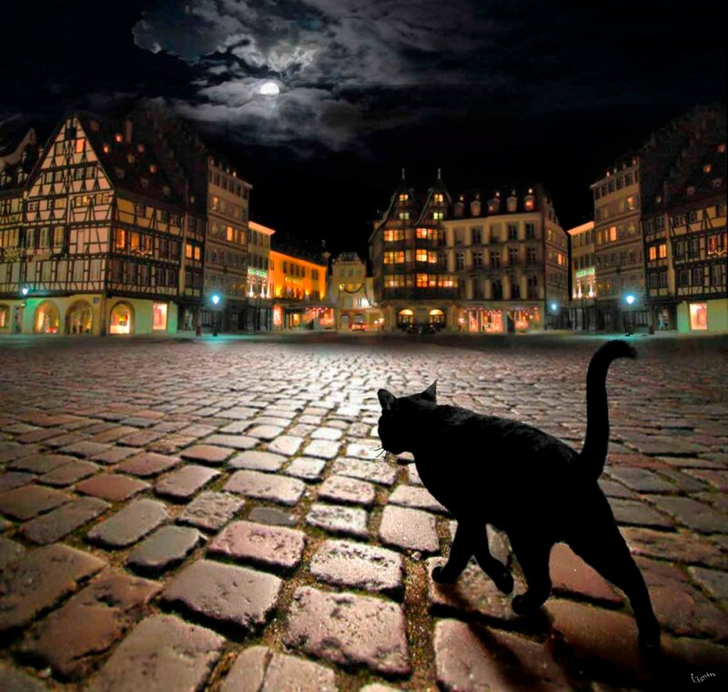 Кошка без дома