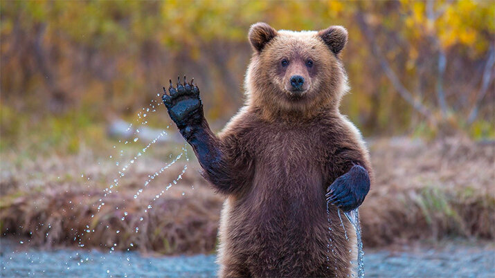 Медведь - животные из дикой природы, интересные кадры