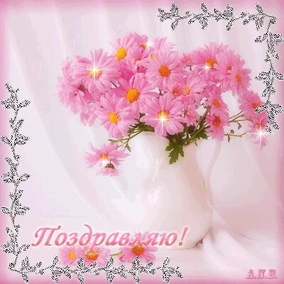 Розовые хризантемы с поздравлением открытка поздравление картинка