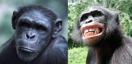 Абсолютный секс с обезьянами