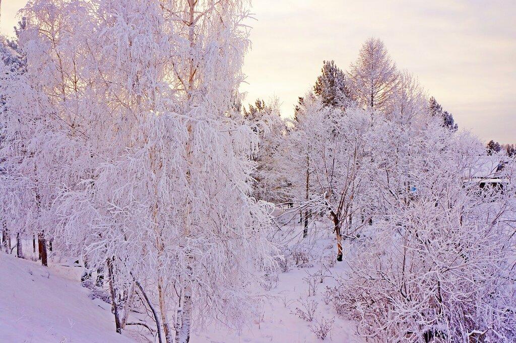 В морозный полдень..jpg