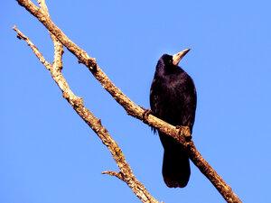 Гордая птица :-)