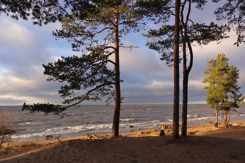 фото пляжей финского залива цвет всегда