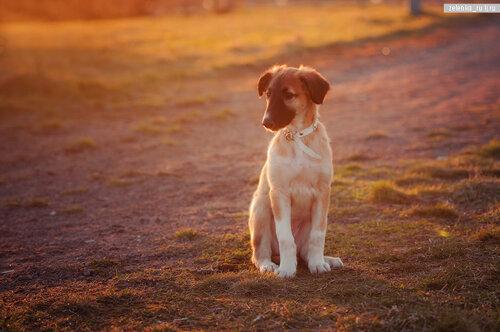 пофотографирую Ваших собак! 0_15d5e0_b12f7496_L