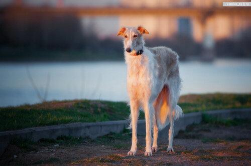 пофотографирую Ваших собак! 0_15d5f2_e5f0f101_L