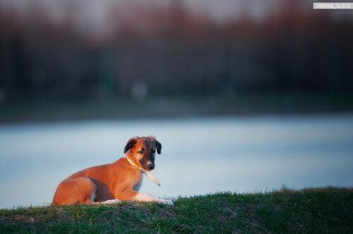 пофотографирую Ваших собак! 0_15d5f4_d95f3042_L