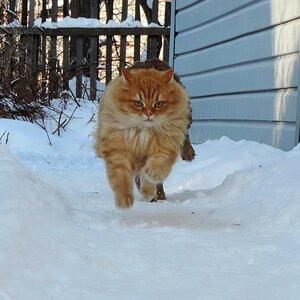 Зима. «С ветром наравне»