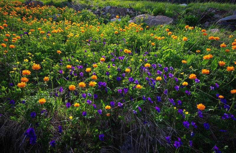Цветное лето