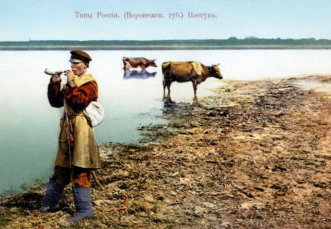 Пастух (Воронежская губерния)