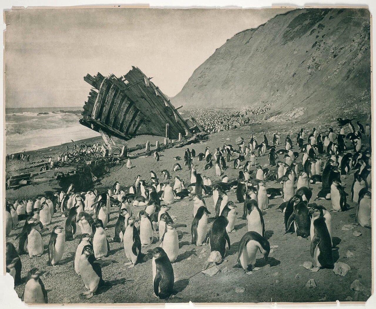 Разбитое промысловое судно «Благодарность» на пляже о. Маккуори. 1911