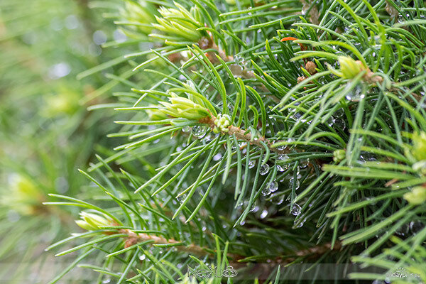 У природы нет плохой погоды, выпуск 01   Дождь.