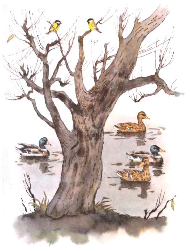 Бианки синичкин календарь апрель