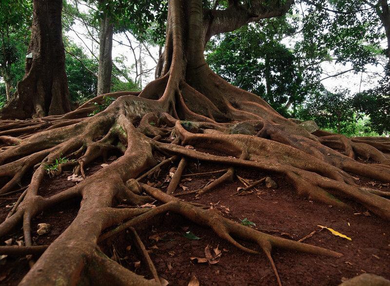 Зри в корень