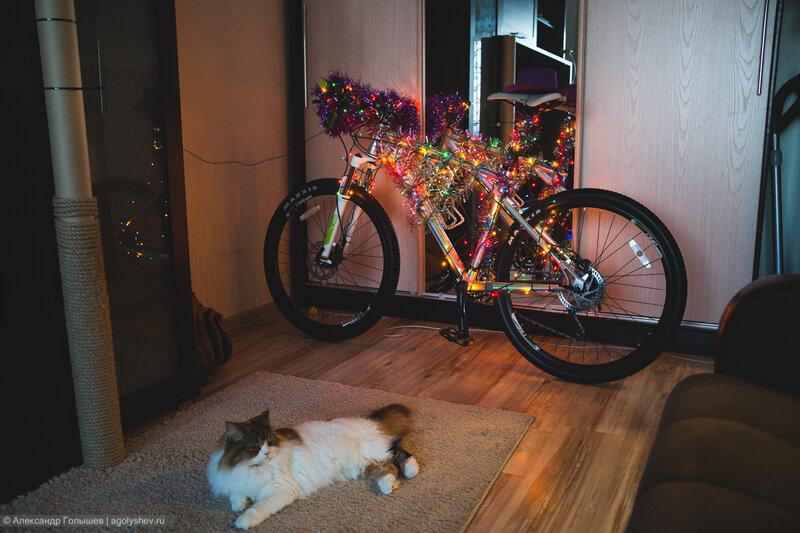 Кошка с новогодней ёлкой