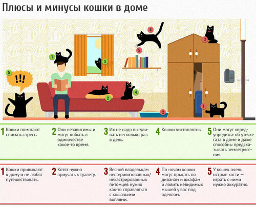 Кошки в доме: за и против