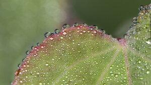 Dew-covered leaf macro