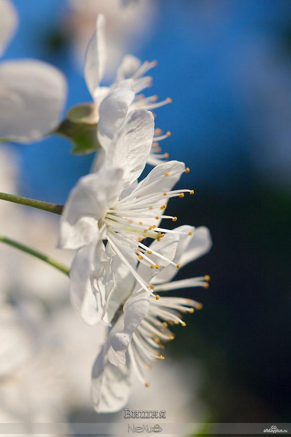 Я люблю все цветы, выпуск #104.5a8