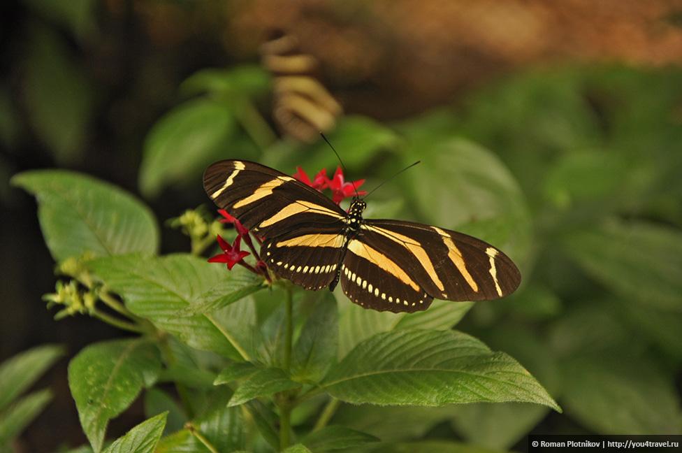 0 168b36 67f7f58c orig День 192 200. Хардин Ботанико, прощальная вечеринка на крыше в Медельине и перелет в Боготу