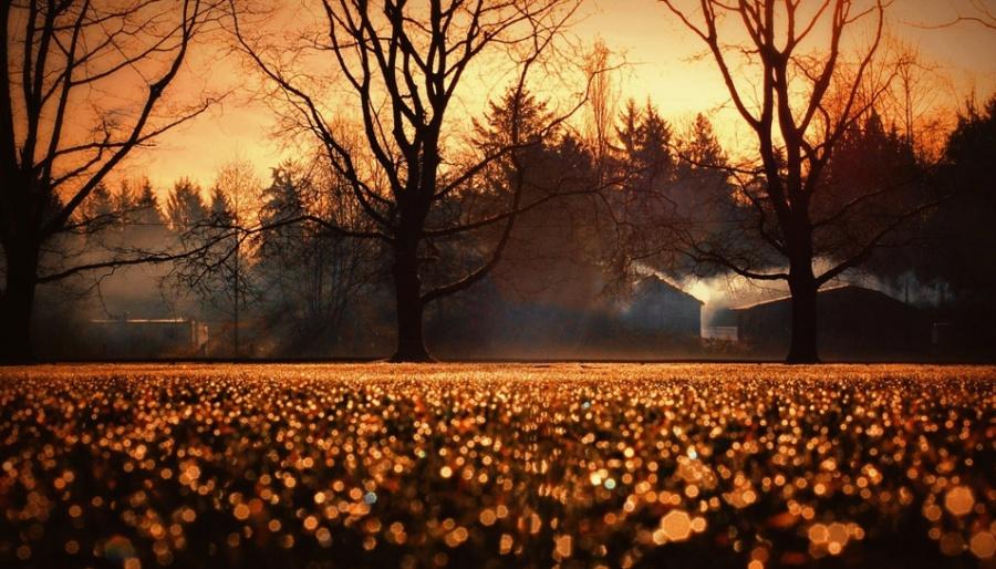 padlib Осенние сны