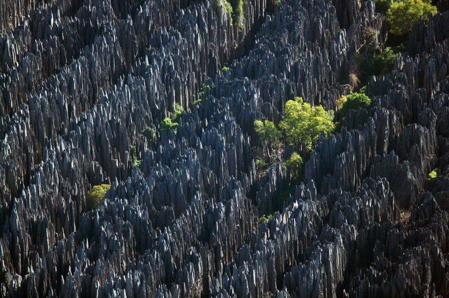 34. Каменный лес Цинги-де-Бемараха, который образовался в результате эрозии более мягкой известняков