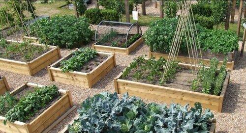 Высокие грядки для овощей и трав