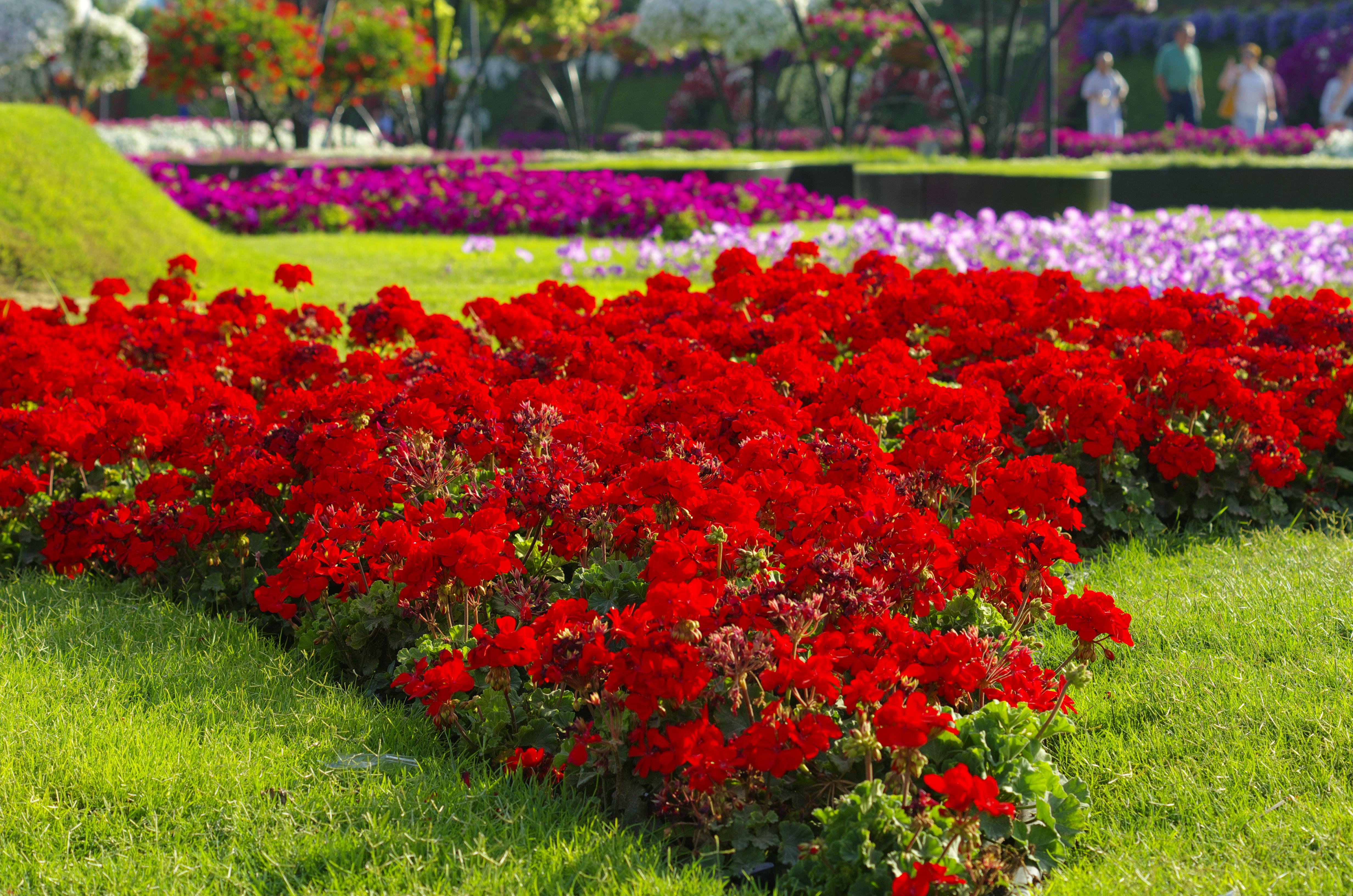 "Сад чудес - ""Miracle Garden"""