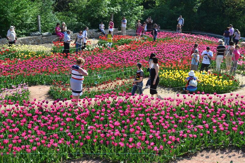 парад тюльпанов в Никите