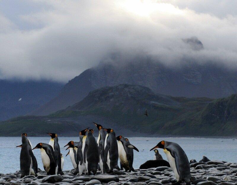 берег пингвинов
