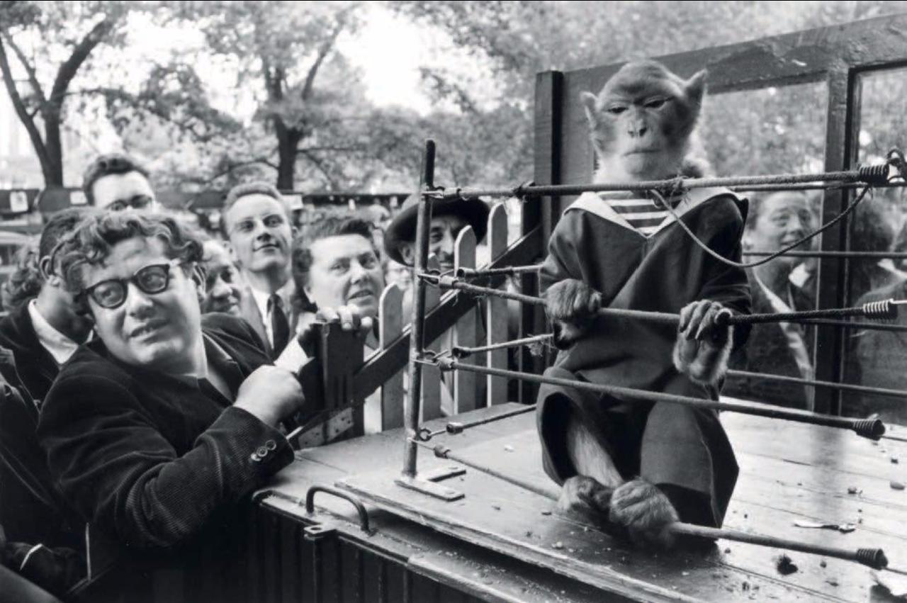 1954. Приматы