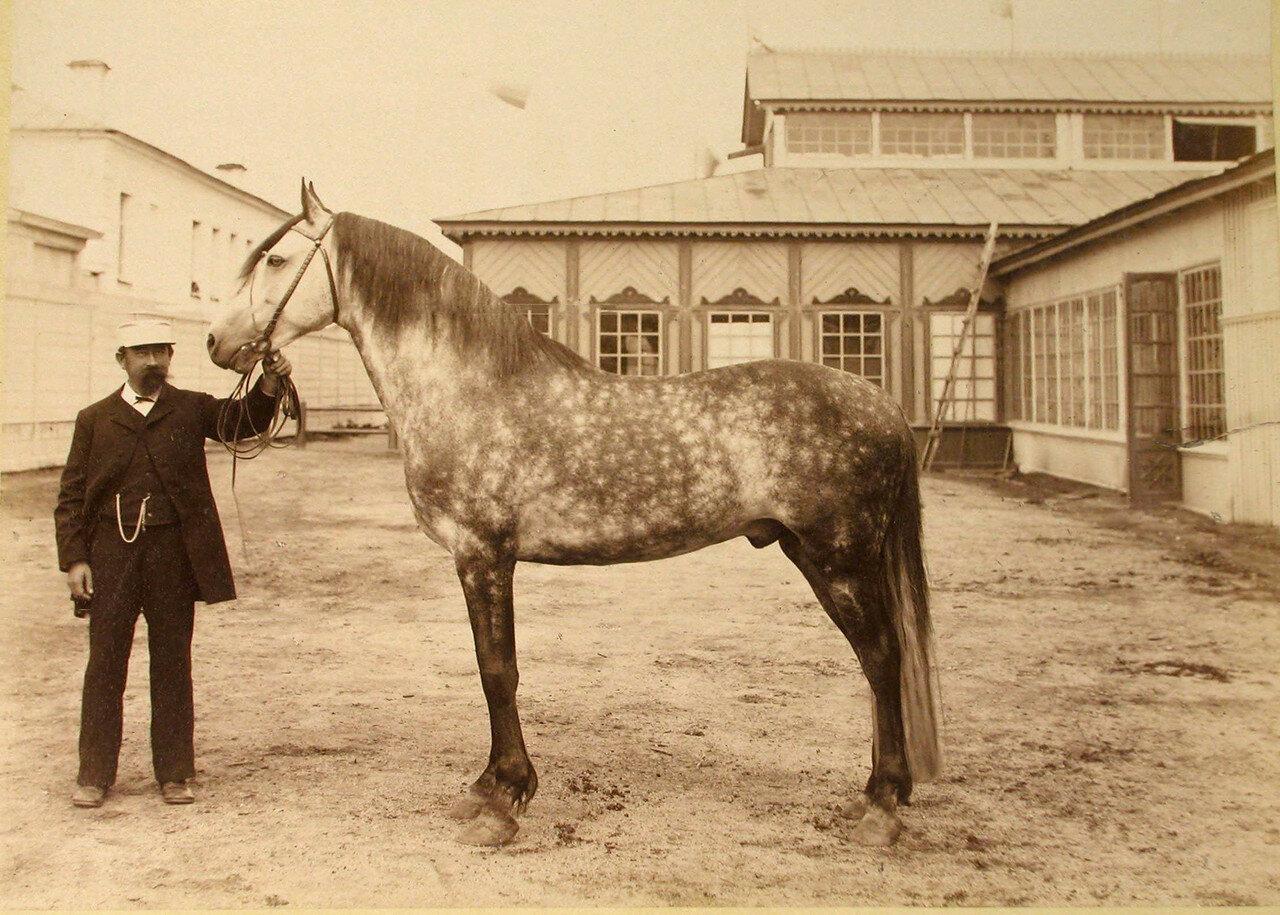 93. Рысистая лошадь завода Подаруева - один из экспонатов выставки