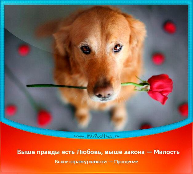 позитивчик дня: Выше правды есть Любовь, выше закона — Милость выше справедливости — Прощение