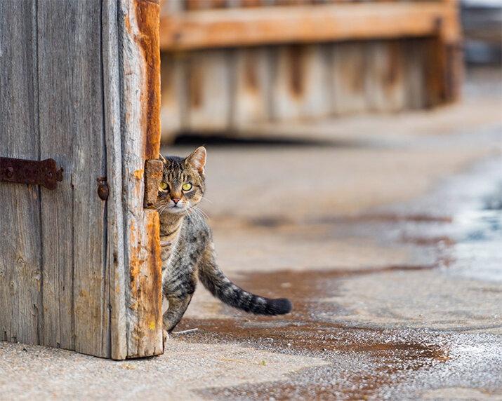 Кот - интересные кадры