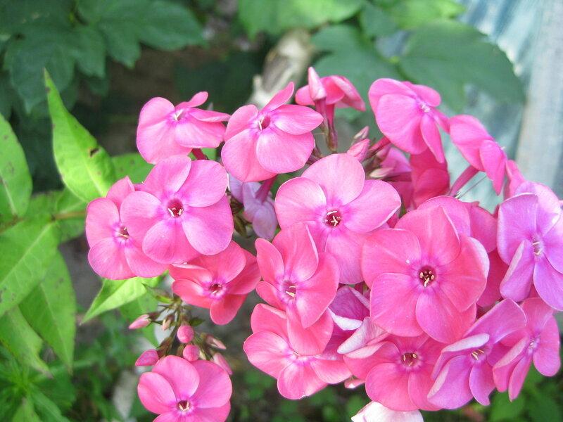 http://img-fotki.yandex.ru/get/9758/19735401.e7/0_829d4_e15ebd17_XL.jpg