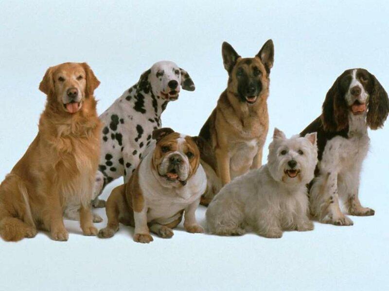 6 пород собак с секретными суперсилами
