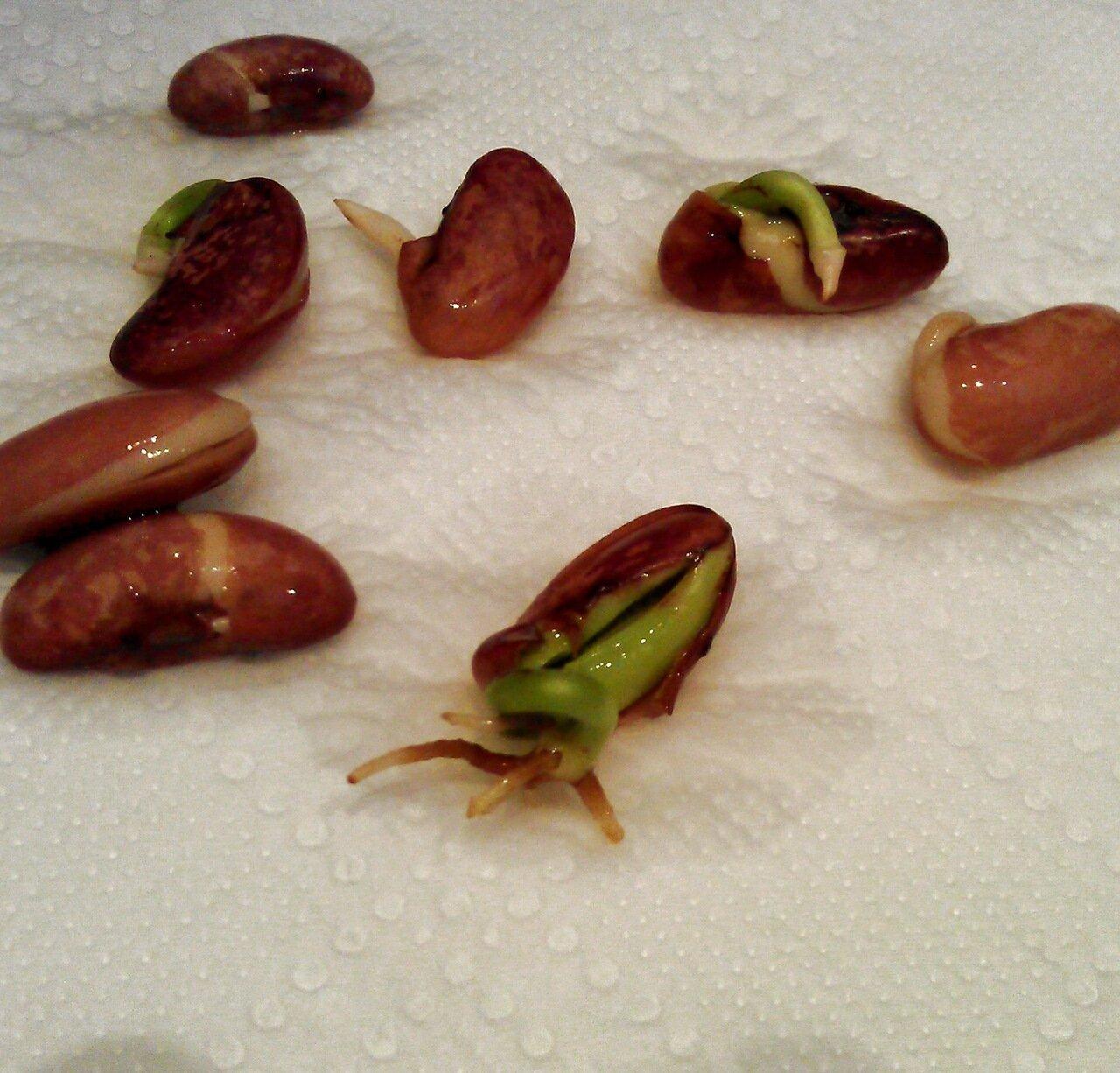 Фото групповой спермы 8 фотография
