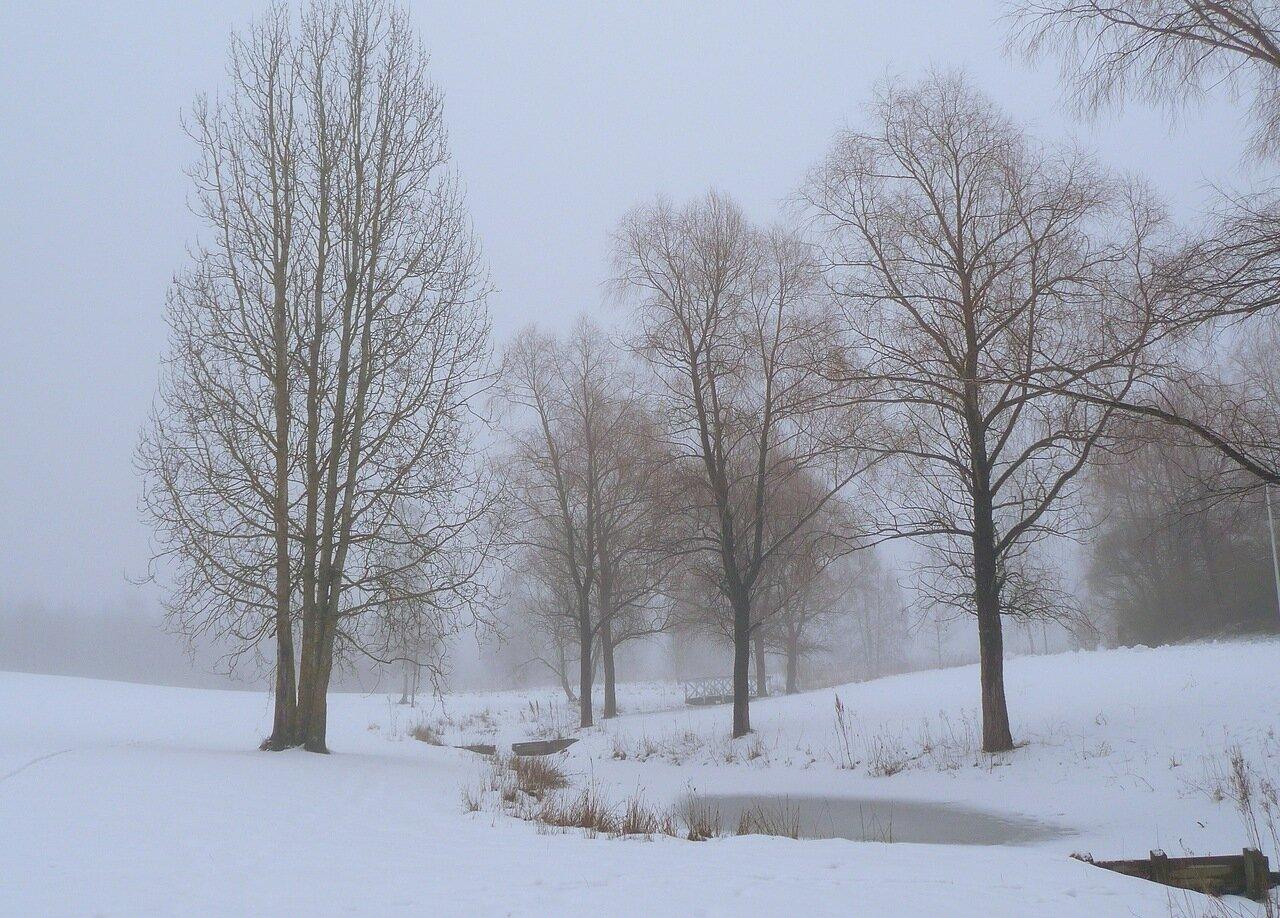 Туман - 12 февраля 2014 г.