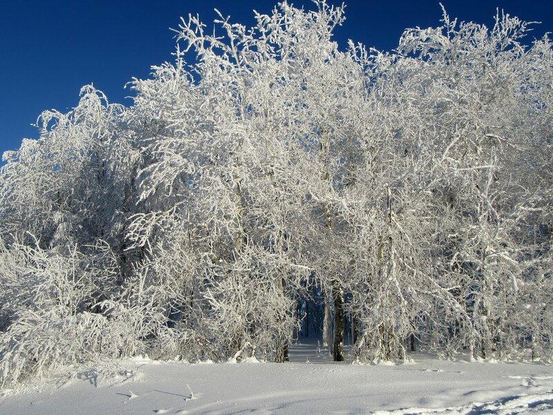 в морозный день...