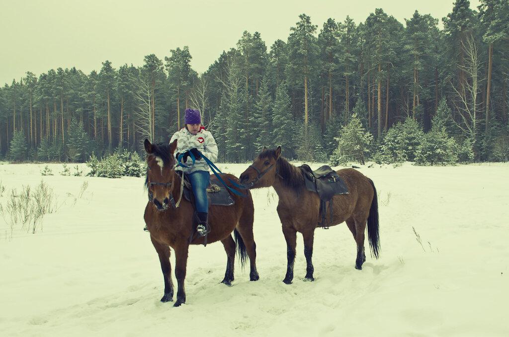 Конные походы. На лесной опушке