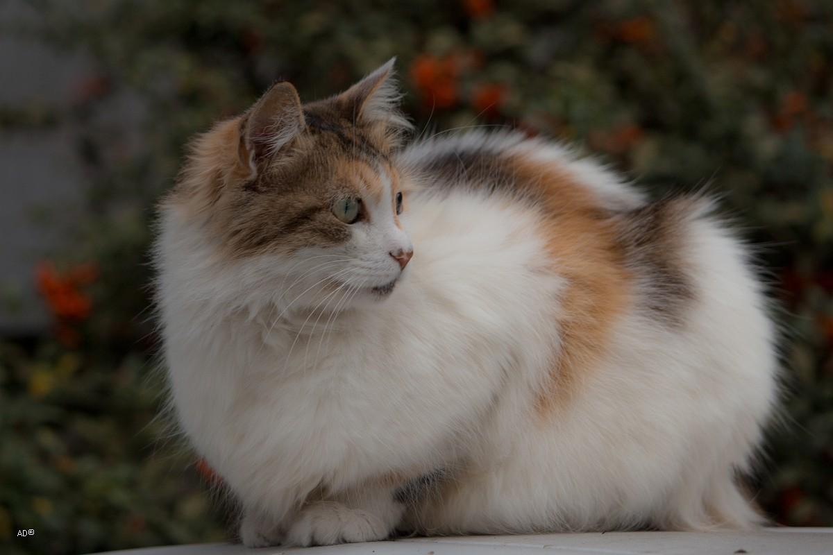Стамбульские кошки
