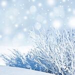 Snow (3).jpg