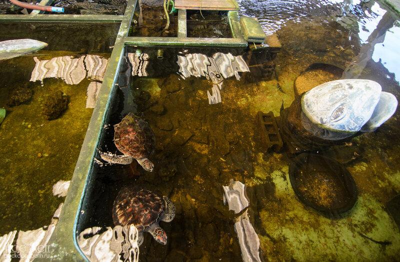 черепахи в бассейне