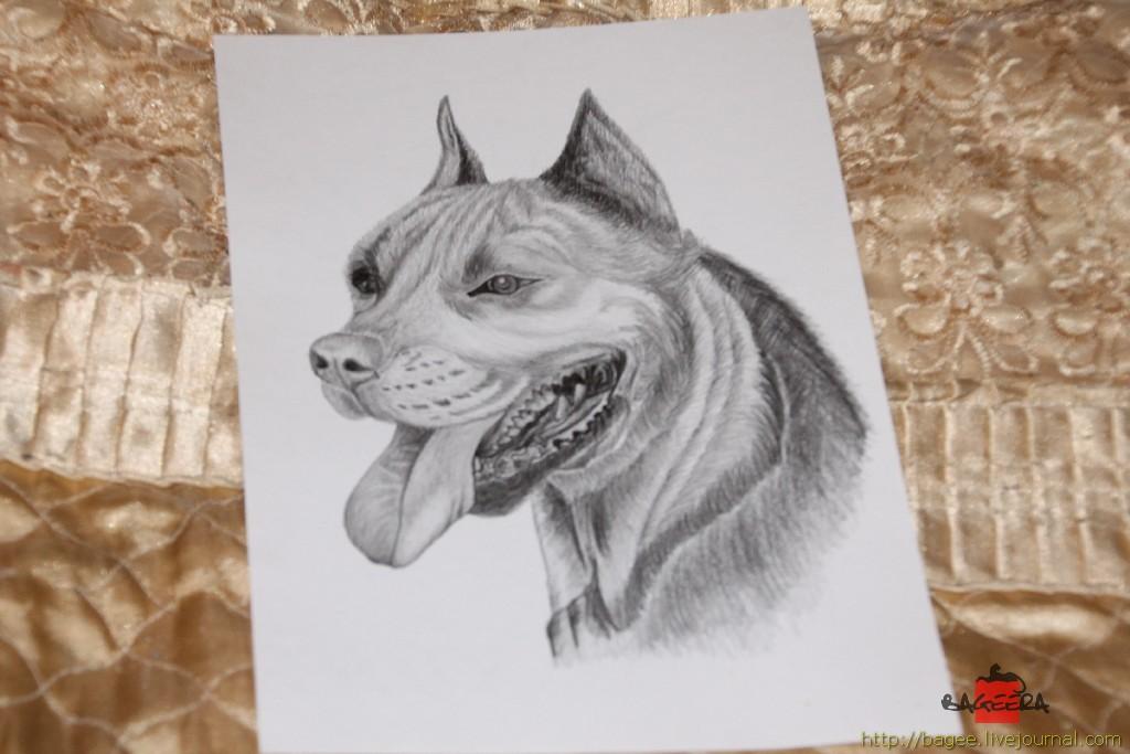 Собака карандашом LYRA ArtDesign