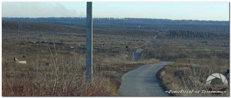 Осенние посадки на месте сгоревшего леса в Тольятти
