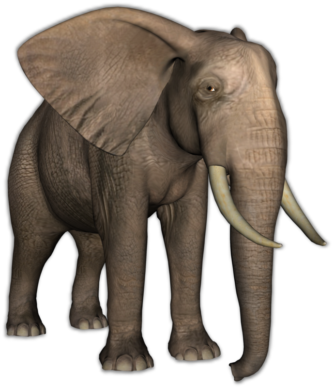 mzimm_call_of_the_jungle_elephant_shadow2.png