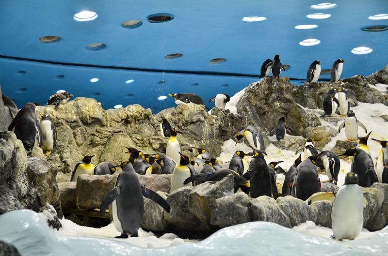 """Планета пингвинов"""