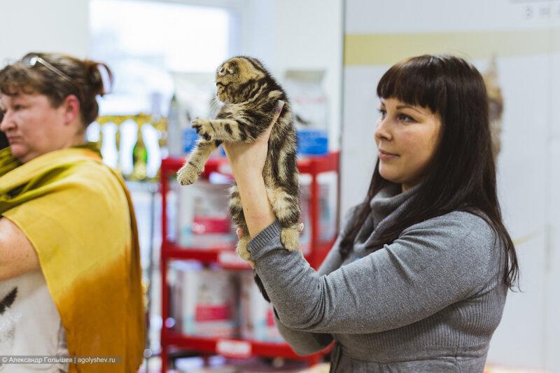 """""""Магическая восьмерка"""" выставка кошек"""