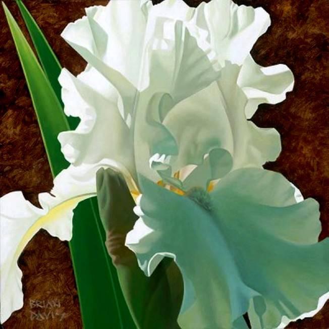 Цветы американского художника Brian Davis