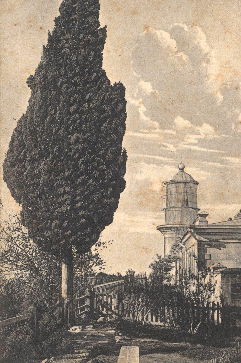 Кипарис у маяка